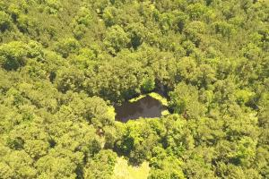41 Acre Hunting/Recreational Tract in Polk, TX (4 of 13)