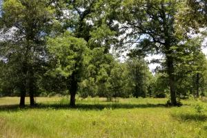 41 Acre Hunting/Recreational Tract in Polk, TX (7 of 13)