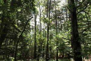 Timber Investment and Hunting Tract  in Attala, MS (9 of 21)