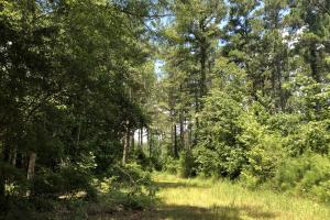 Timber Investment and Hunting Tract  in Attala, MS (6 of 21)