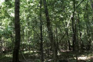 Timber Investment and Hunting Tract  in Attala, MS (11 of 21)