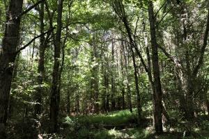 Timber Investment and Hunting Tract  in Attala, MS (7 of 21)