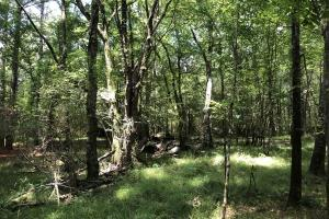 Timber Investment and Hunting Tract  in Attala, MS (21 of 21)
