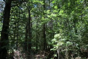 Timber Investment and Hunting Tract  in Attala, MS (10 of 21)