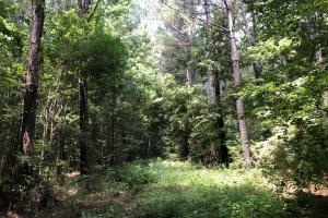 Timber Investment and Hunting Tract  in Attala, MS (12 of 21)