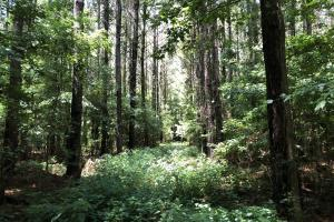 Timber Investment and Hunting Tract  in Attala, MS (13 of 21)
