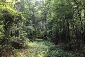 Timber Investment and Hunting Tract  in Attala, MS (17 of 21)