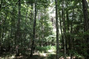 Timber Investment and Hunting Tract  in Attala, MS (5 of 21)