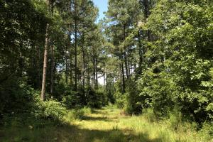 Timber Investment and Hunting Tract  in Attala, MS (3 of 21)