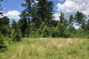 Timber Investment and Hunting Tract  in Attala, MS (4 of 21)