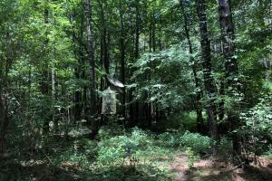 Timber Investment and Hunting Tract  in Attala, MS (20 of 21)