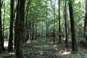 Timber Investment and Hunting Tract  in Attala, MS (15 of 21)