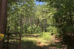 Timber Investment and Hunting Tract  in Attala, MS (2 of 21)