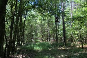 Timber Investment and Hunting Tract  in Attala, MS (18 of 21)