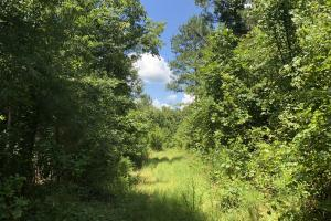 Timber Investment and Hunting Tract  - Attala County MS