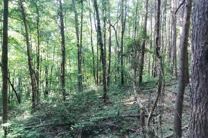 Lost Creek Hunting Tract in Jefferson, AL (14 of 19)