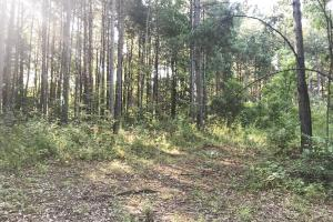 Lost Creek Hunting Tract in Jefferson, AL (6 of 19)