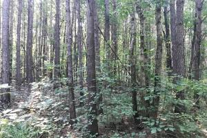 Lost Creek Hunting Tract - Jefferson County AL