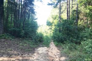 Lost Creek Hunting Tract in Jefferson, AL (8 of 19)