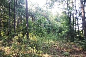 Lost Creek Hunting Tract in Jefferson, AL (3 of 19)
