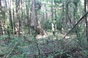 Lost Creek Hunting Tract in Jefferson, AL (15 of 19)