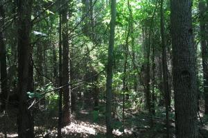 Fortenberry Timberland Property - Lauderdale County MS