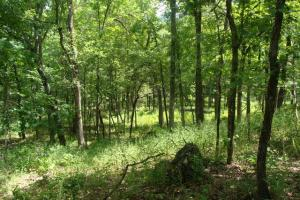 716+/- Acre White River Hunting & Trout Fishing Property in Izard, AR (66 of 79)