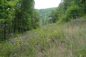 716+/- Acre White River Hunting & Trout Fishing Property in Izard, AR (58 of 79)
