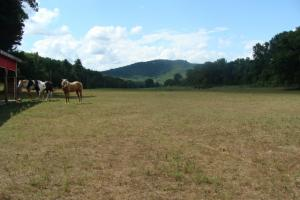 716+/- Acre White River Hunting & Trout Fishing Property in Izard, AR (39 of 79)