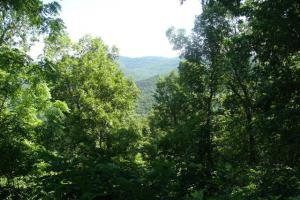 716+/- Acre White River Hunting & Trout Fishing Property in Izard, AR (7 of 79)