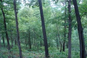 716+/- Acre White River Hunting & Trout Fishing Property in Izard, AR (71 of 79)