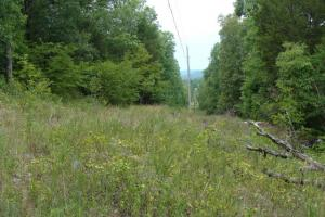 716+/- Acre White River Hunting & Trout Fishing Property in Izard, AR (59 of 79)
