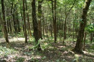 716+/- Acre White River Hunting & Trout Fishing Property in Izard, AR (62 of 79)