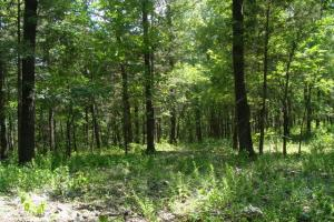 716+/- Acre White River Hunting & Trout Fishing Property in Izard, AR (64 of 79)