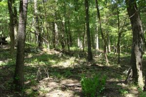716+/- Acre White River Hunting & Trout Fishing Property in Izard, AR (61 of 79)
