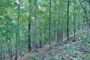 716+/- Acre White River Hunting & Trout Fishing Property in Izard, AR (68 of 79)