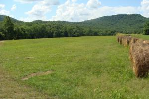 716+/- Acre White River Hunting & Trout Fishing Property in Izard, AR (30 of 79)