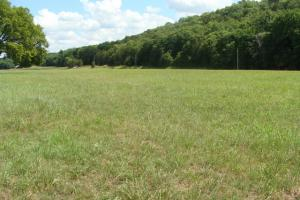 716+/- Acre White River Hunting & Trout Fishing Property in Izard, AR (35 of 79)