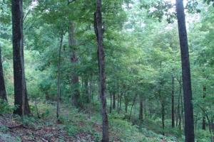716+/- Acre White River Hunting & Trout Fishing Property in Izard, AR (72 of 79)