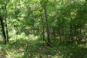 716+/- Acre White River Hunting & Trout Fishing Property in Izard, AR (67 of 79)