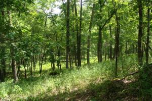 716+/- Acre White River Hunting & Trout Fishing Property in Izard, AR (70 of 79)