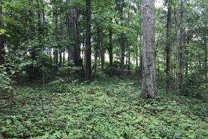 Easley Homesite and Recreational Property in Pickens, SC (23 of 29)