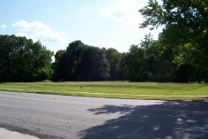 <p>Street view with trees.</p>