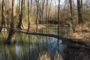 Move views of Cane Creek. (3 of 23)