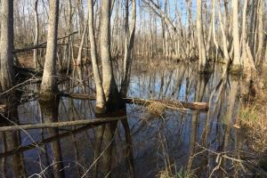 Flooded timber along Cane Creek bottoms. (10 of 23)