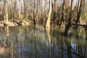 Thurman Rogers Flats Cane Creek Bottoms Hunting Green Timber at Lebanon - White County AR