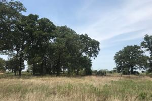 13.43 ac Canton, Pasture, Timber, Building Site - Van Zandt County TX