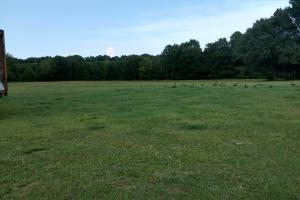 Another picture of the back pasture.  (10 of 10)