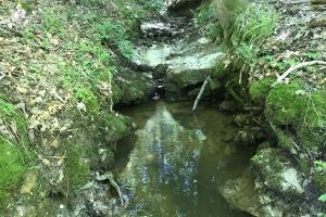 Tunnel Springs Hardwood & Creek Tract - Monroe County AL