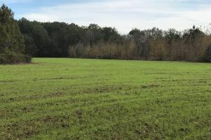 Tombigbee River Bottom Recreational, Hunting, and Timber - Noxubee County MS